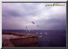 Gallipoli Lecce Italy - golfo riviera scirocco gabbiani.jpg